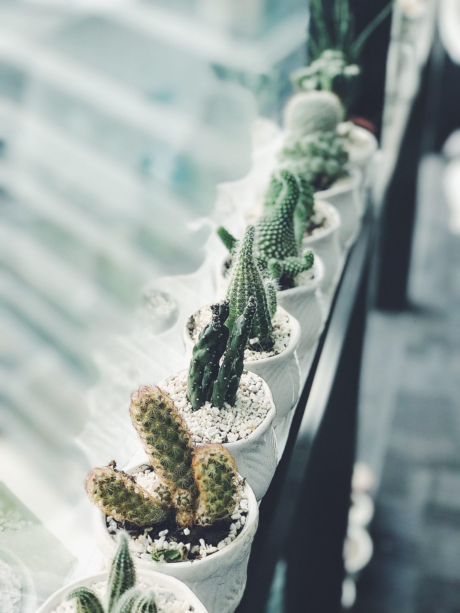 planten in je interieur - kamerplant ideeën cactus
